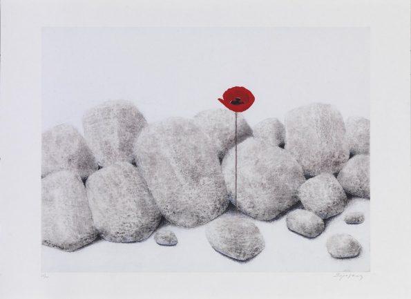Παπαρούνα με πέτρες